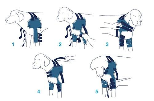 BT-LUX-Balto-Dog-Shoulder-Brace-Instructions