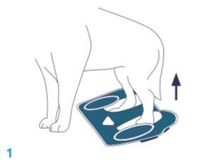 Balto-BT-LIFE-Dog-Brace-Fitting-1