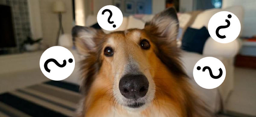DogQuestion
